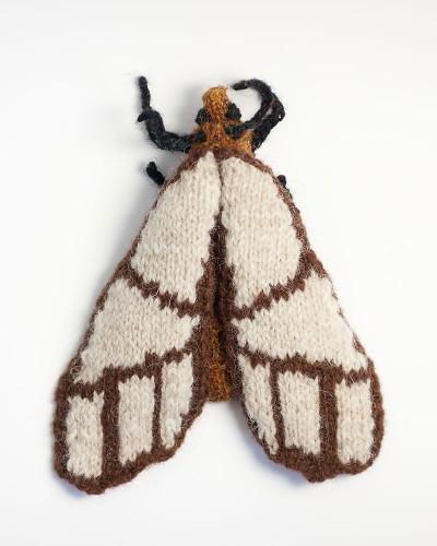 Banded Bagnest Moth