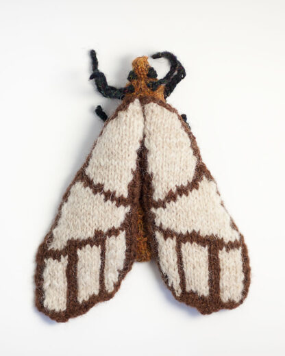 Banded Bagnest Moth (Anaphe panda)