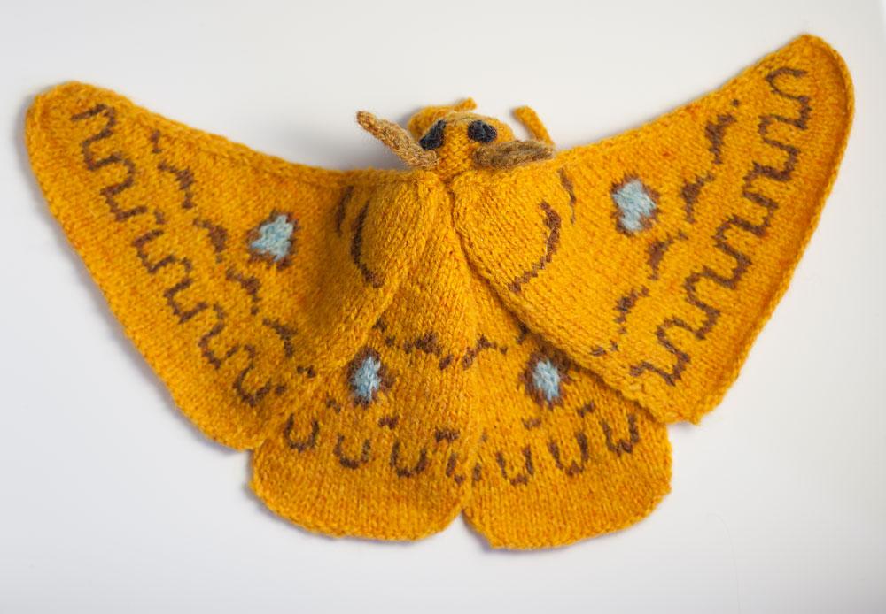 Squeaking Silk Moth (Rhodinia fugax)
