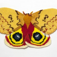 Automeris Io Moth