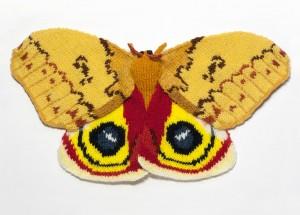 Io Moth (Automeris Io)