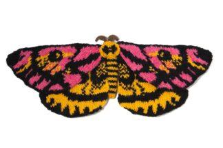 Elegant Sheep Moth 2 - Hemileuca eglanterina