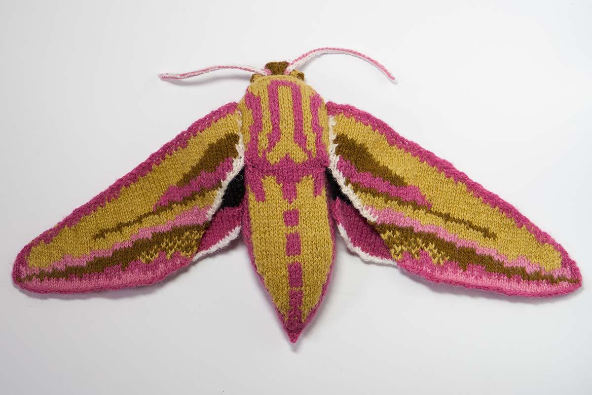 Elephant hawk-moth - Deilephila elpenor