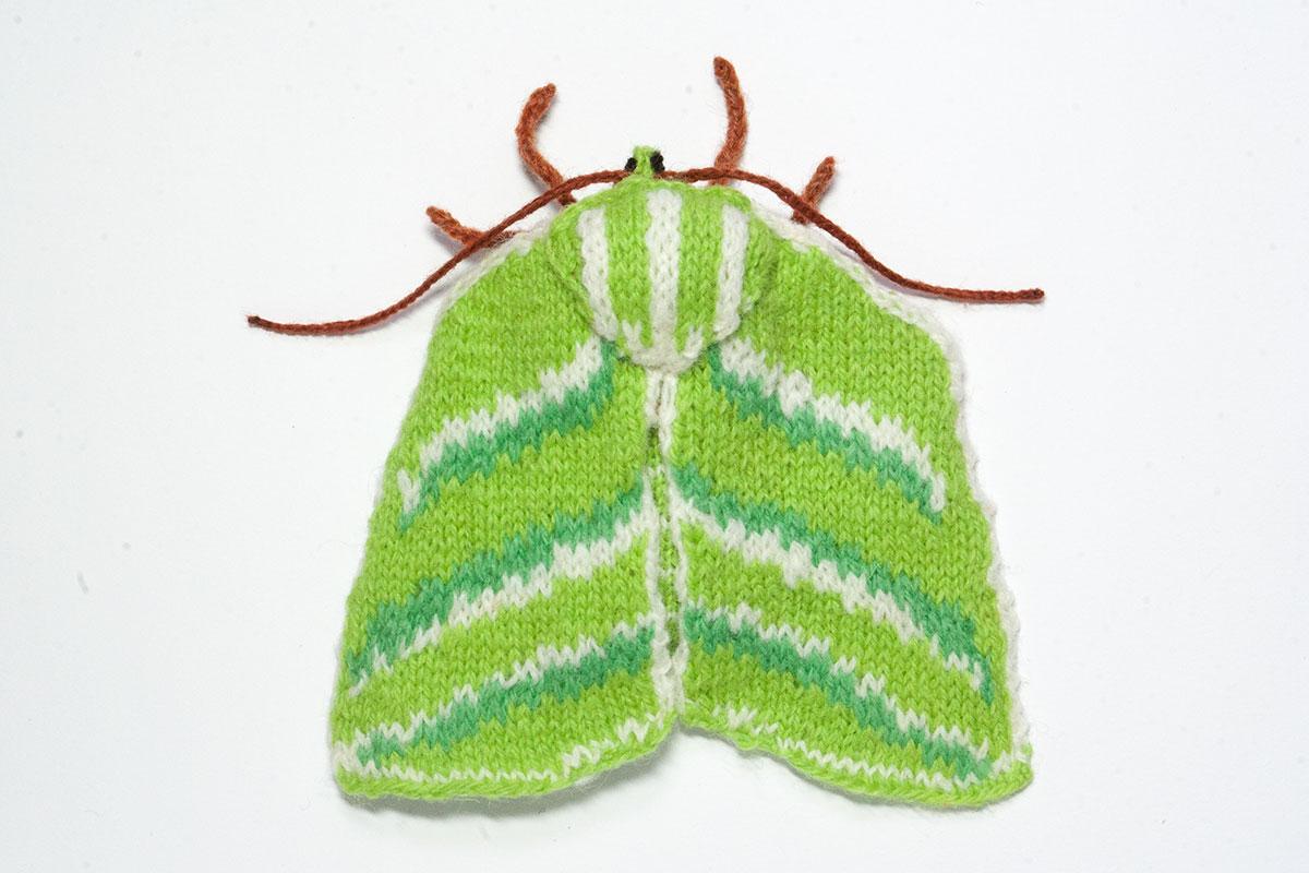Green Silverlines Moth (Pseudoips prasinana)