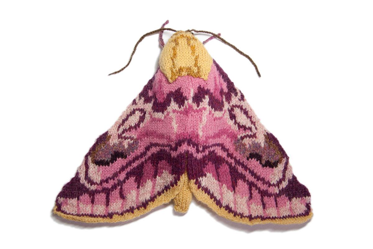 Pease Blossom Moth (Periphanes delphinii)