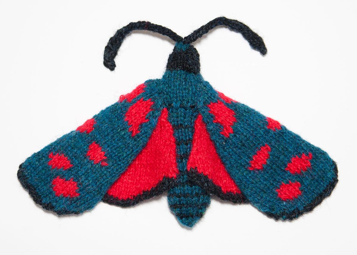 Six Spot Burnet Moth (Zygaena filipendulae)