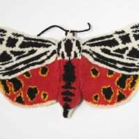 Virgin Tiger Moth - Grammia virgo