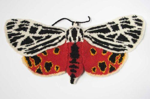 Virgin Tiger Moth - Grammia virgo