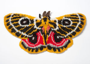 Zaddach's Emperor Moth (Buaneopsis oubie)