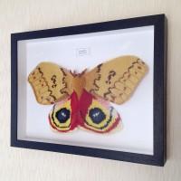 Framed Knitted Moths
