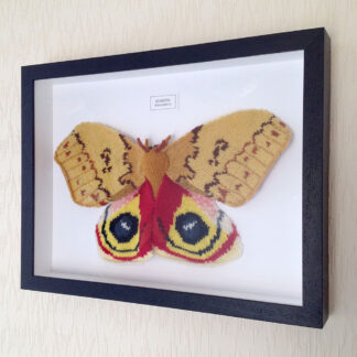 Framed Knitted Moths
