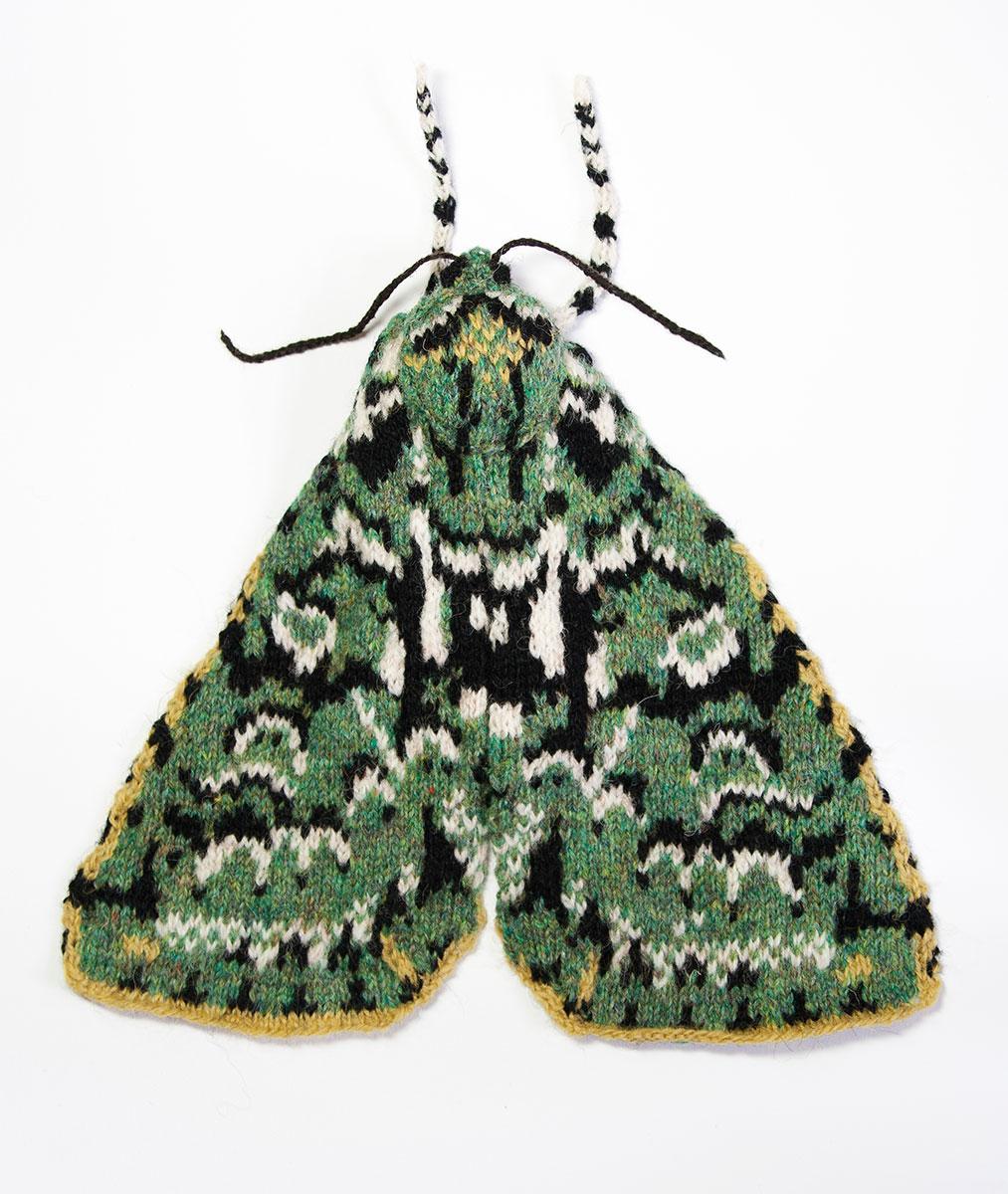 Merveille du Jour Moth