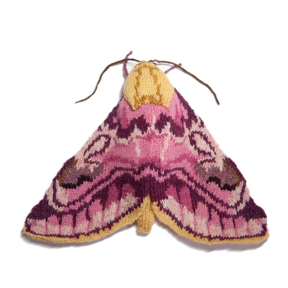pease-blossom-moth-square