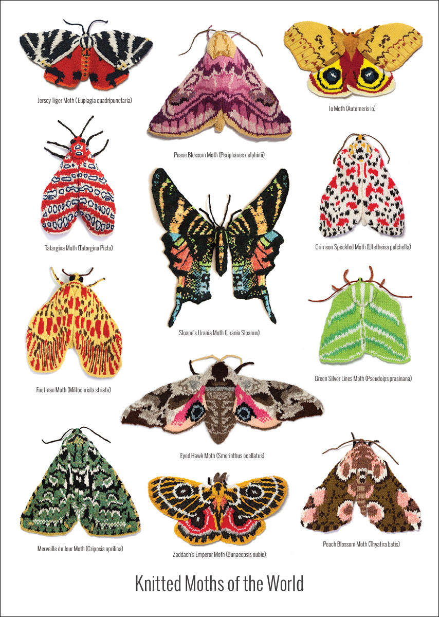 Knitted Moths of the World