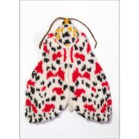 Crimson Speckled Moth Card