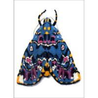 Lily Moth Card