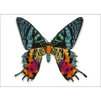 Moth Cards & Prints