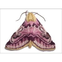 Pease Blossom Moth Card