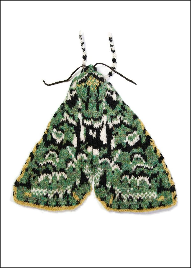 merveille du jour moth a4 print. Black Bedroom Furniture Sets. Home Design Ideas