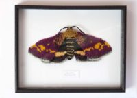 Knitted Mint Moth Framed