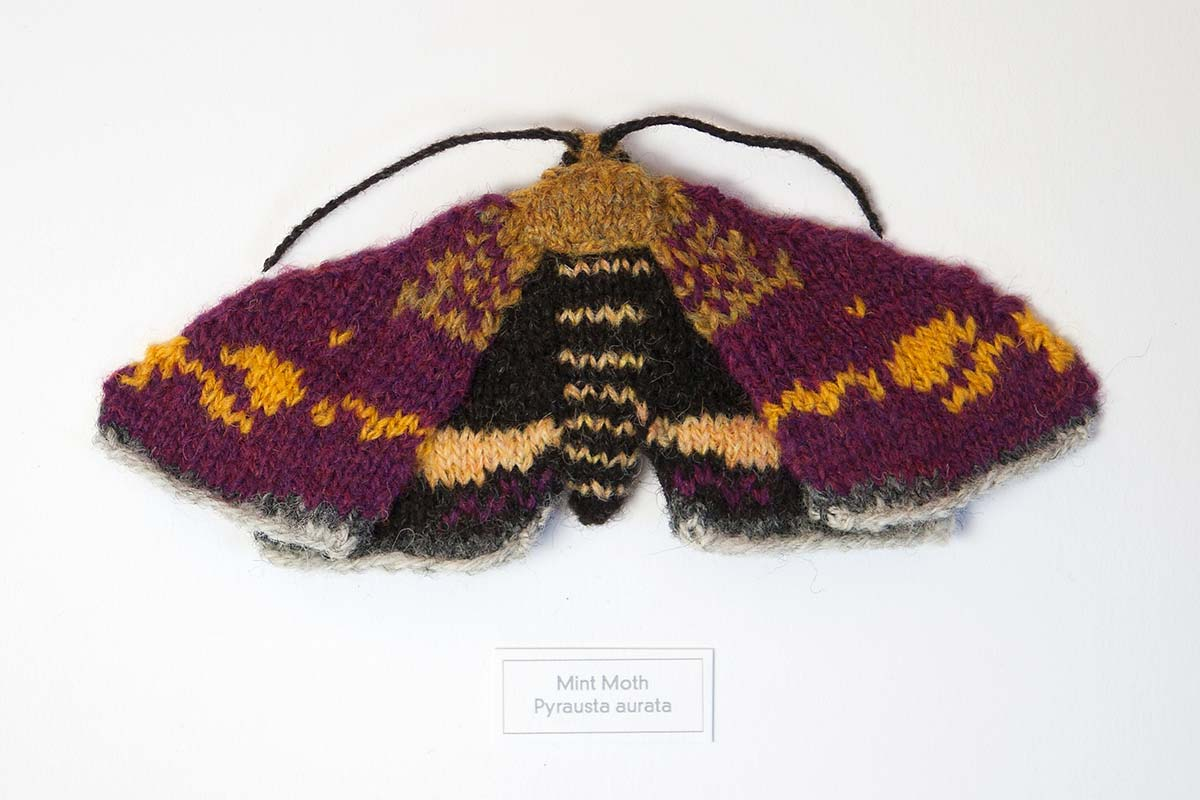 Knitted Mint Moth