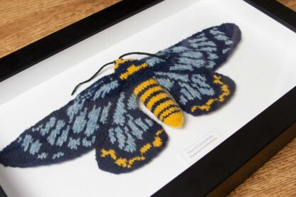 Knitted Blue & Yellow moth.