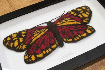 Knitted Fiery Campylotes Moth in Black Wood Frame