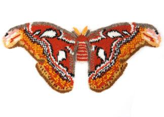 Knitted Atlas Moth