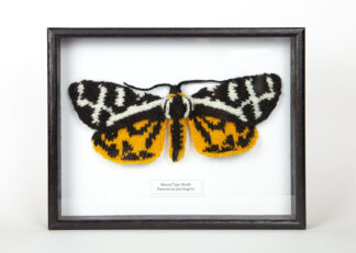 A knitted black, white & yellow moth in a black wood frame with name label