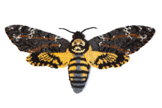 Knitted Death's Head Hawkmoth