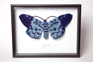Framed Blue Tiger Moth