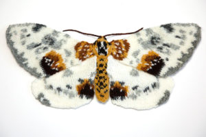 Clouded Magpie Moth