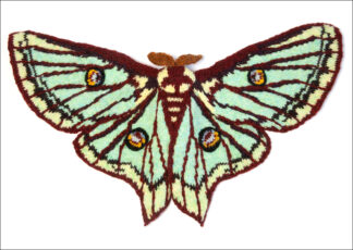 knitted Spanish moon Moth