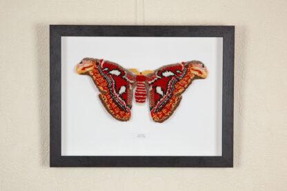 knitted atlas moth in dark wood frame