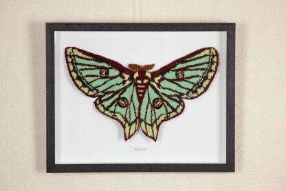 framed knitted Spanish Moon Moth