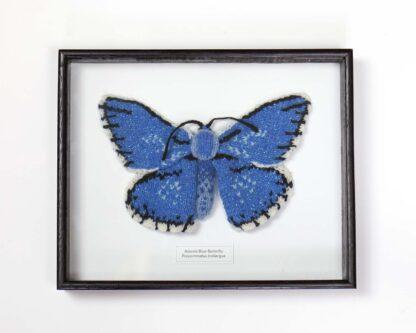 blue butterfly in dark frame