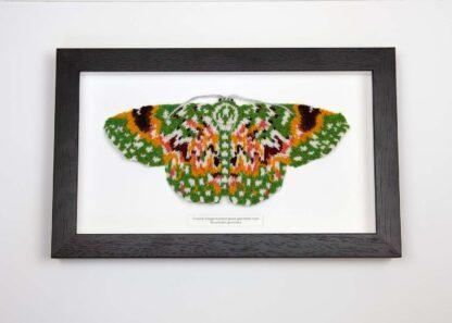 framed knitted green and orange moth