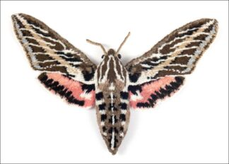 knitted white lined sphinx moth on a white background